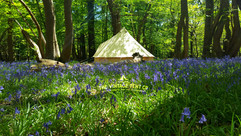 bluebells and bell tents the vintage tent company