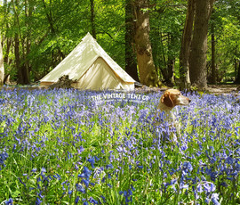 Bluebells and Bell Tents