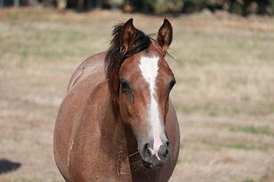 yearlings and foal feb 12 018.JPG
