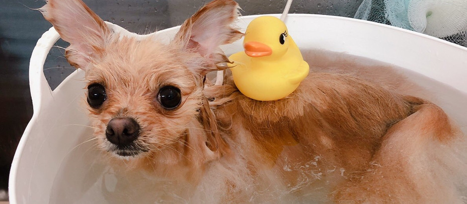 明けましておめでとうございます。2019年・新年1/5スタート♪ハッピーテイル・トリミング肌質皮膚疾患改善・犬のアトピー・しつけ相談・ペットホテル・アクアゼオ