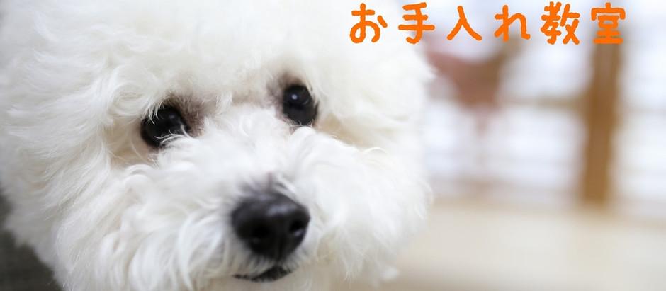 1/27わんちゃんのお手入れ教室♡正しいシャンプーの仕方・アトピー・敏感肌・病気予防・セミナー・新潟市・ハッピーテイル・小型犬のシャンプー