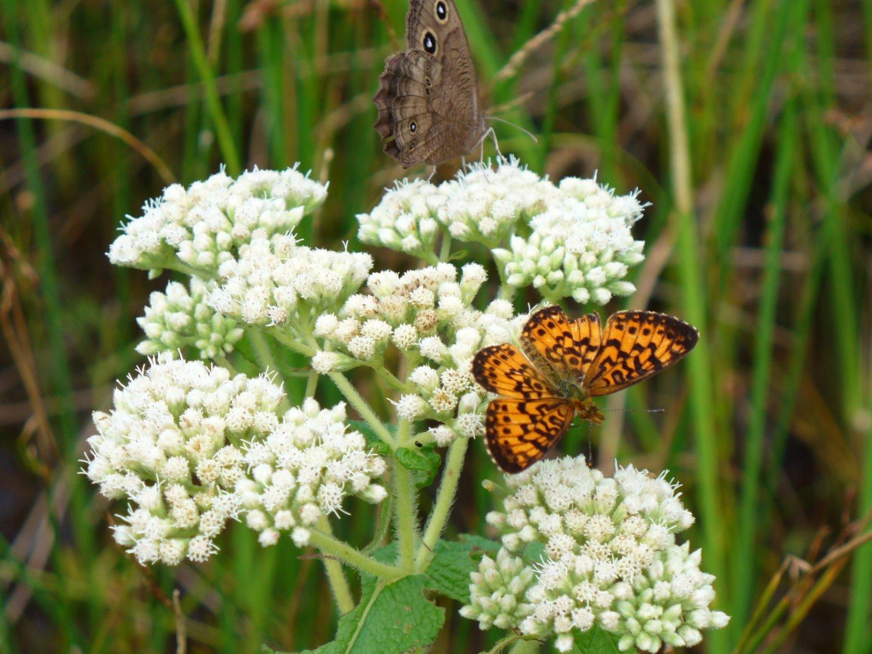 2 butterflies_edited