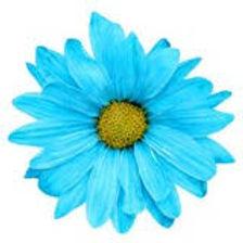 coloured flower.jpg