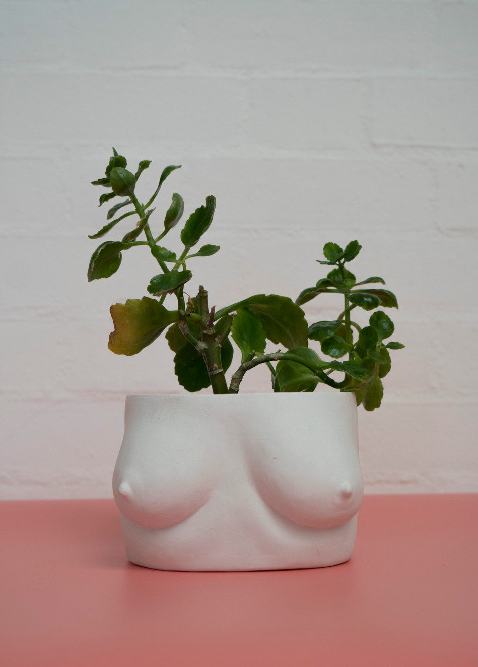 Marble Plant-Tits