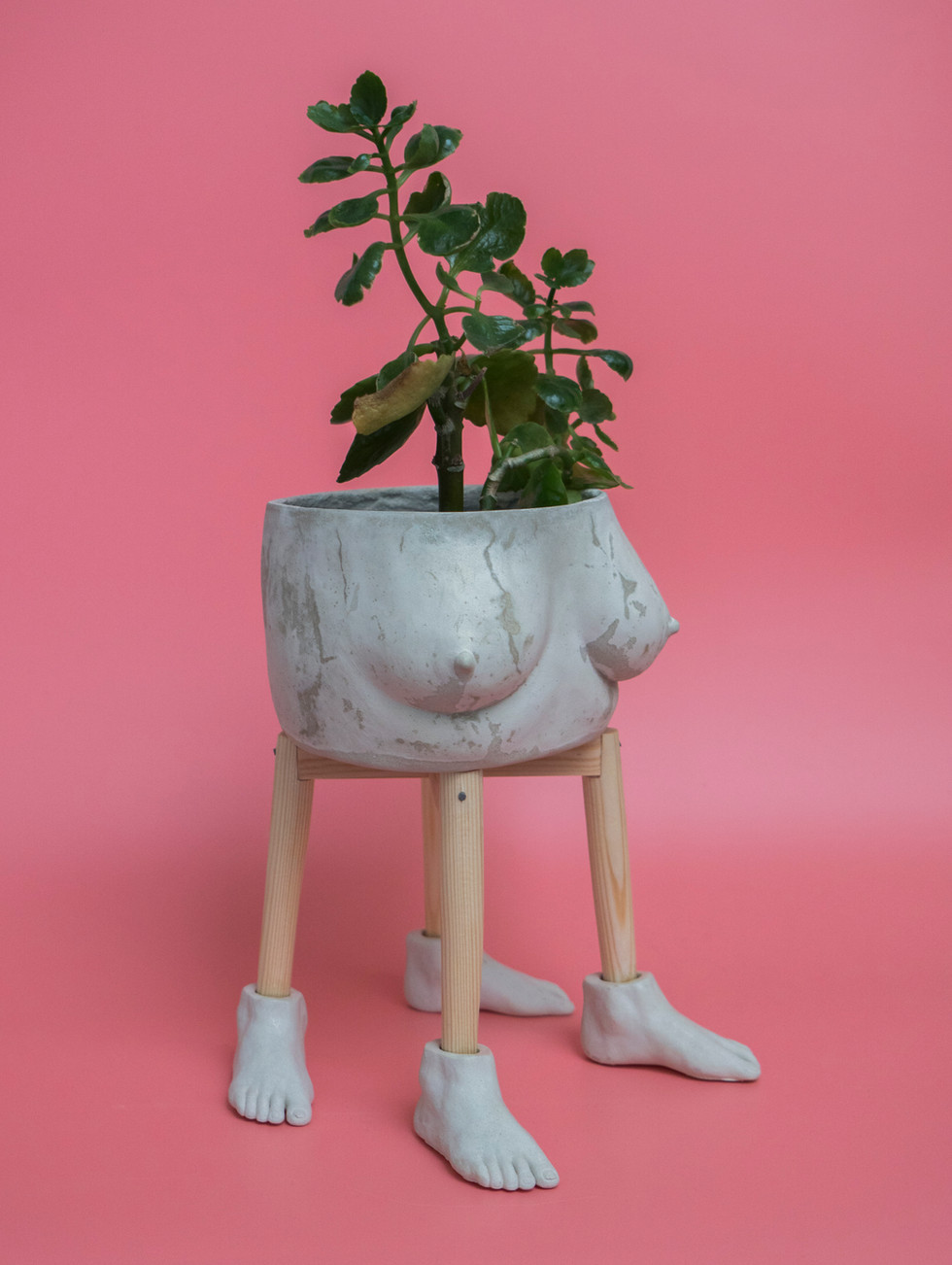 Plant-Tits and Leg Stand