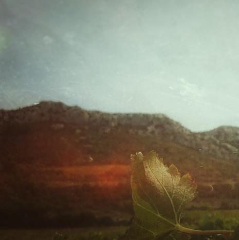 © Valérie Salvo Instants Nature