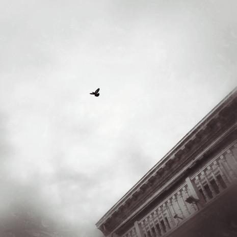 © Valérie Salvo Parmi