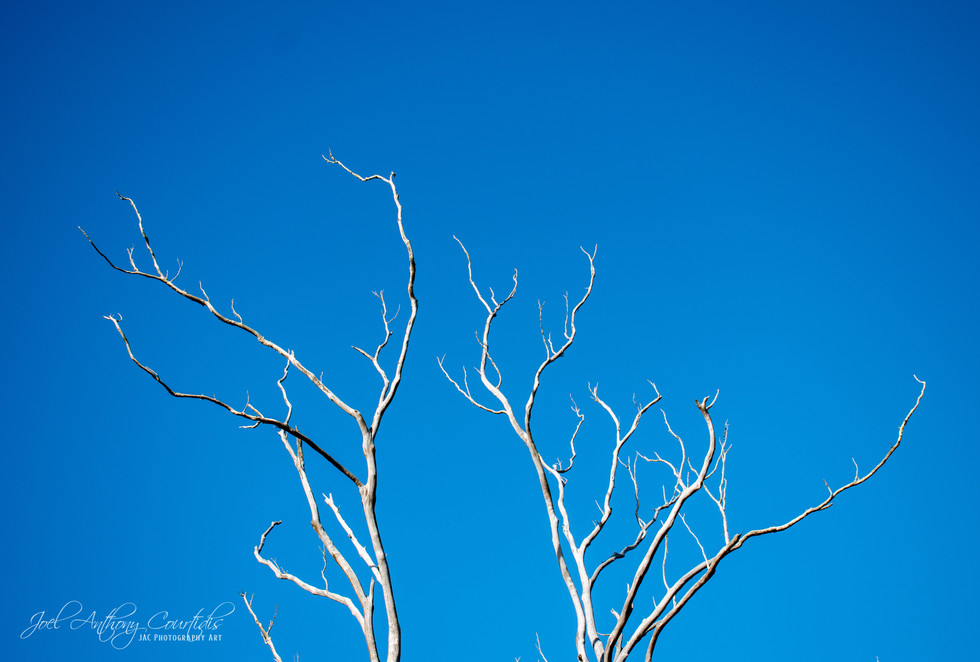 Ghost Tree 2