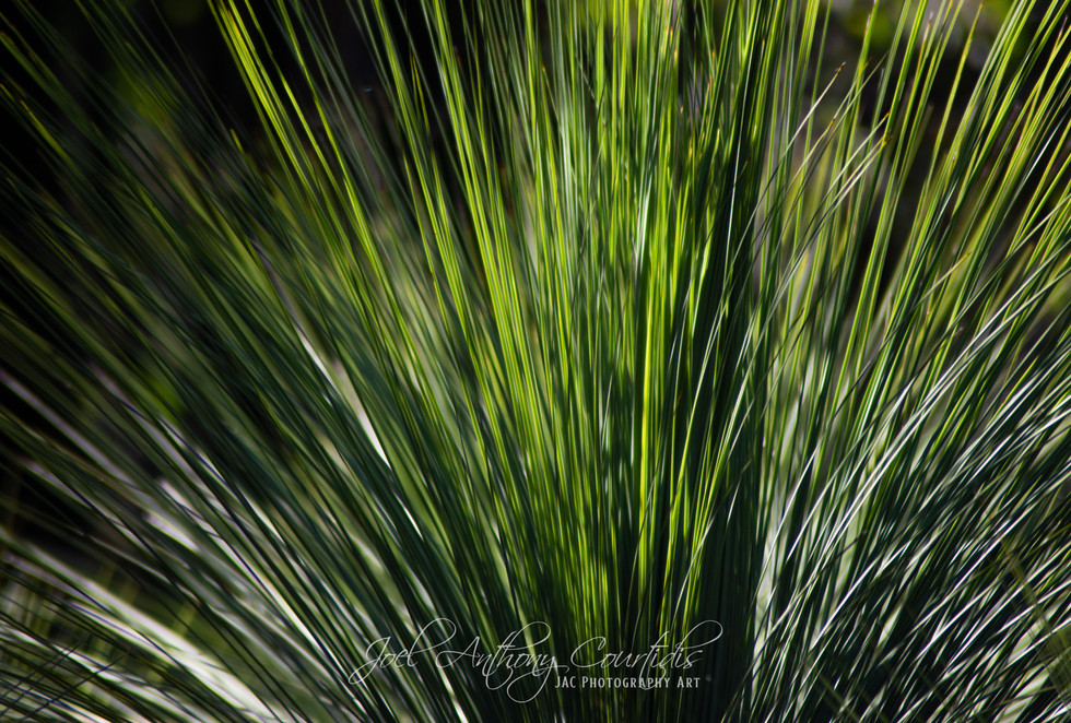 Grass Tree 2