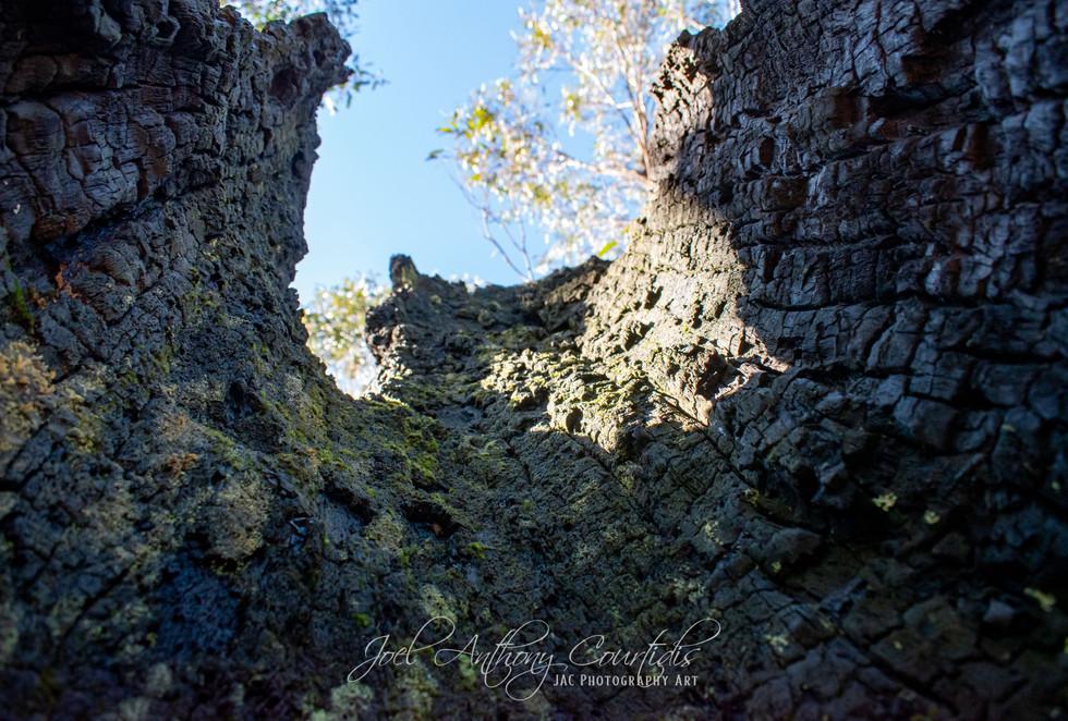Charred Tree Hollow