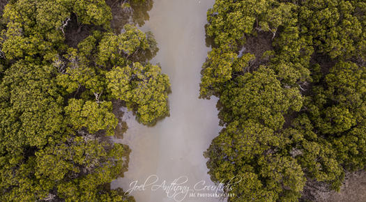 Southern Mangroves