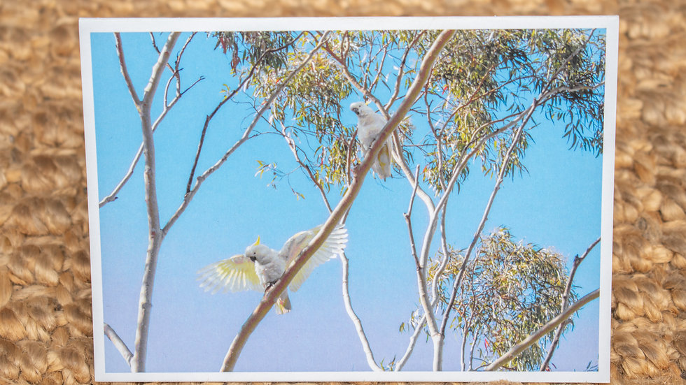 Cockatoo Wings