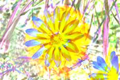 Fabric Dye Flower