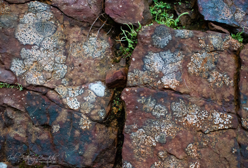 Natures Rock Art 2