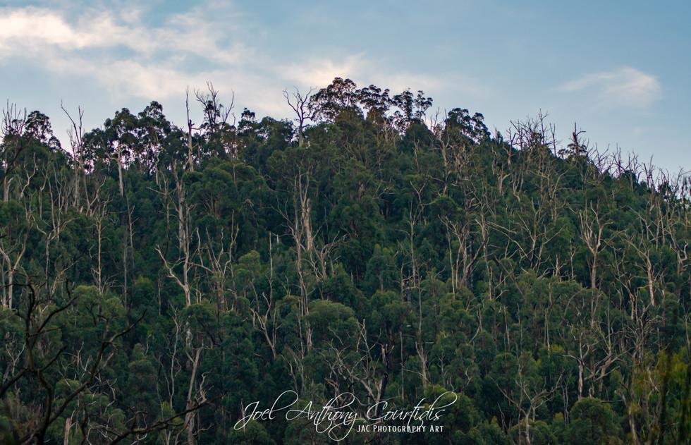 Mount Sugarloaf-2.jpg