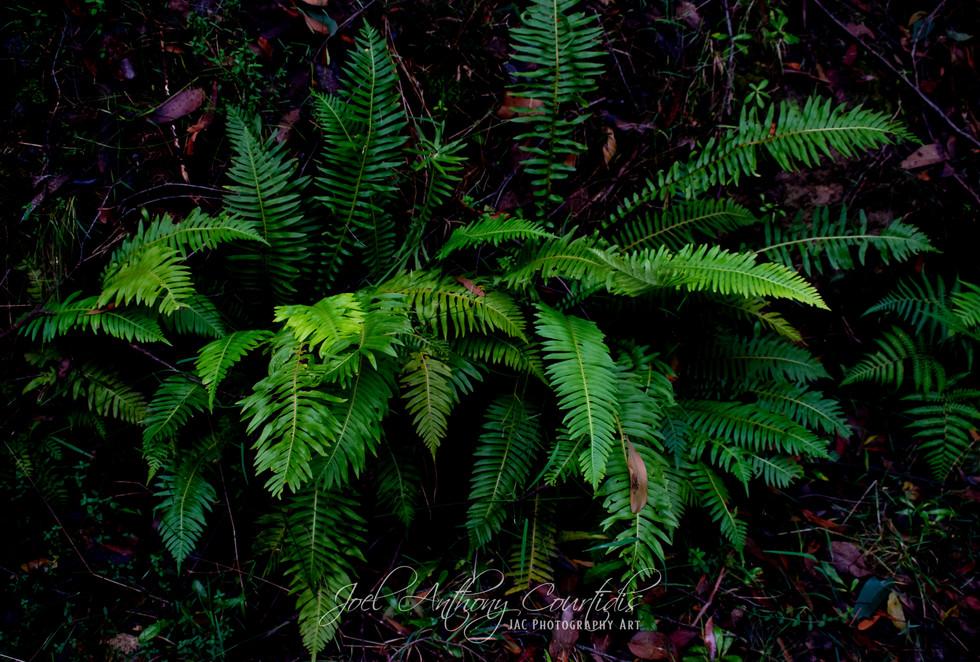 Mount Everard Trail-15.jpg