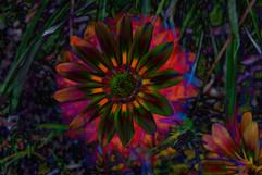 Negative Flower