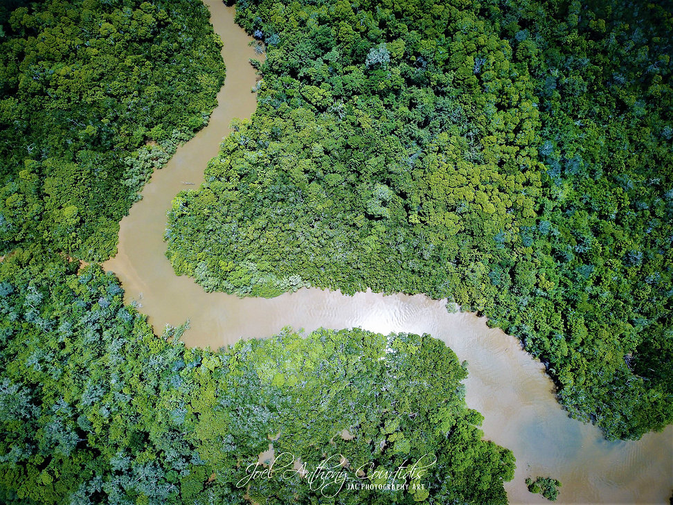 Mangroves from above.jpg