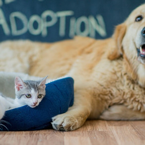 PAWS-itive Vibes: Humane Society of OC