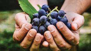 Low Intervention vs. Organic Wines
