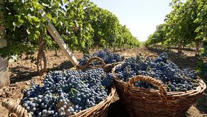 Moldova, wine producing country