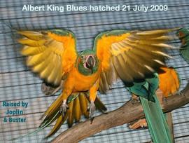 Albert Kind Blues.jpg