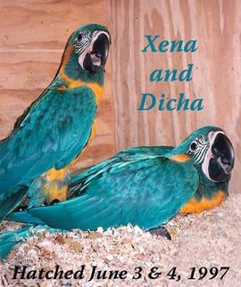 Xena and Dicha.jpg