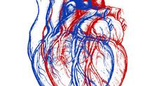 Científicos revelan que el corazón tiene mente cuántica