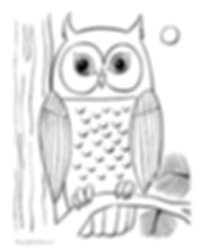 Owl colouring-in page
