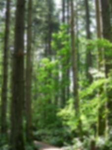 Copy of SAHS, Urban Forest, June 3 06, D