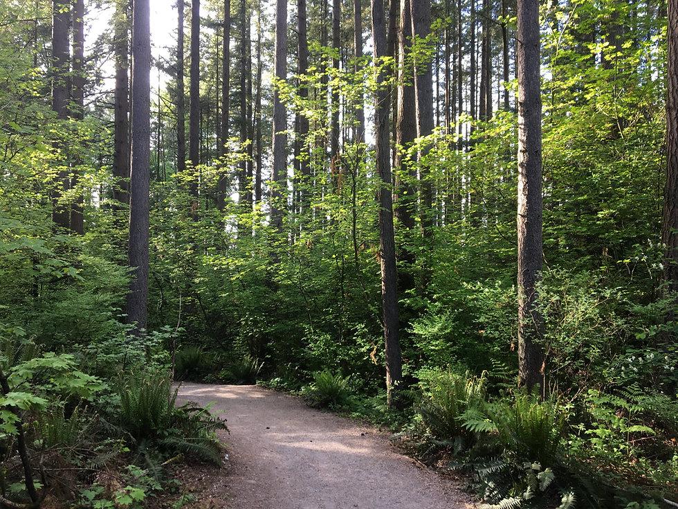 urban forest trail in spring by Sasha Fa