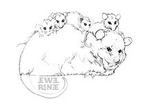 Possum colouring page