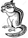 chipmunk colouring page
