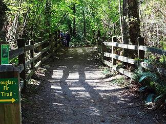 Sunnyside Acres Urban Forest bridge