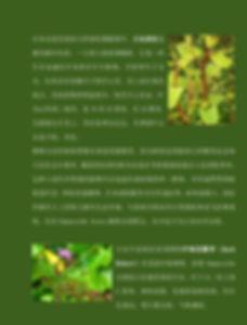 knotweed.jpg