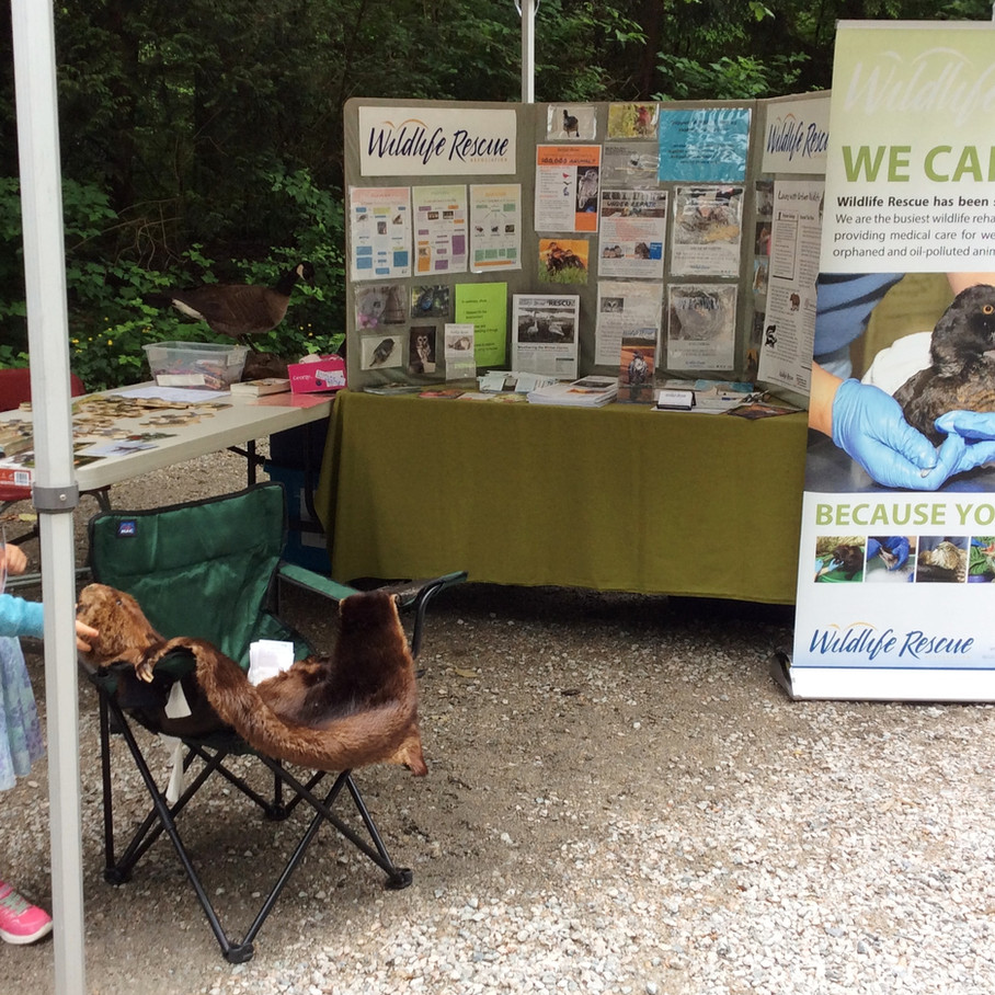 Open House 2018 - Wildlife Rescue Association booth.jpg