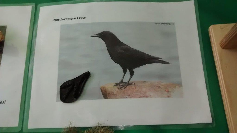 North American crow, and foot fossil