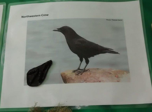 Local Crows