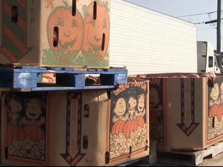Thousands of sweet potatoes donated to local agencies