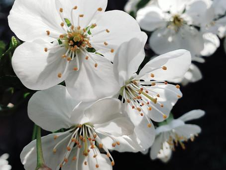 Spring! The season of hope.