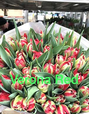 Tulpen%205_edited.jpg