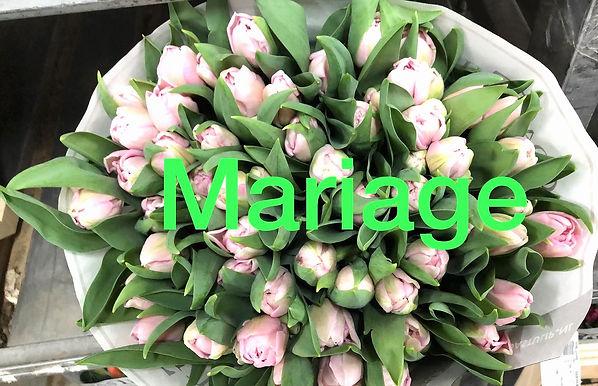 Tulpen%206_edited.jpg