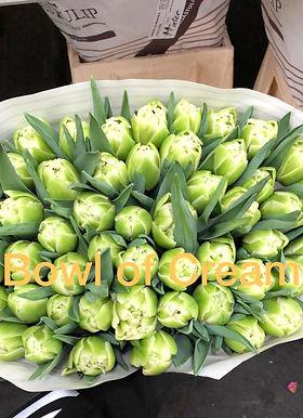 Tulpen_edited.jpg