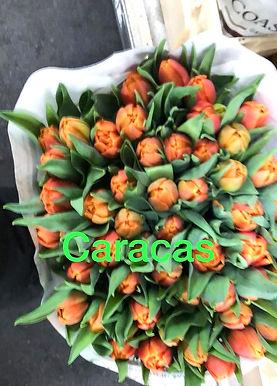 Tulpen%202_edited.jpg