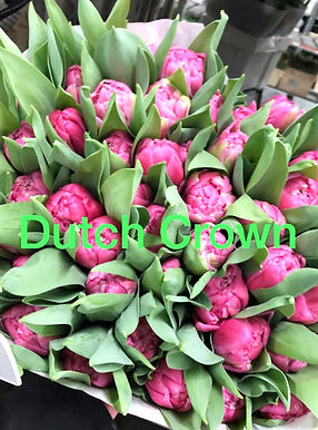 Tulpen4_edited.jpg