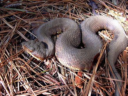 NutriBAC Snake