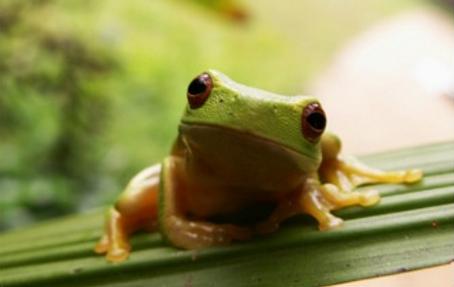 NutriBAC frog