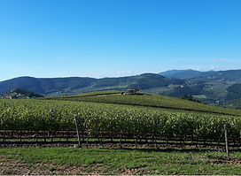 Panorama sul Chianti