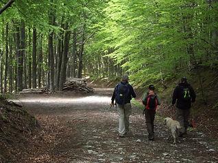 Foreste Casentinesi.JPG