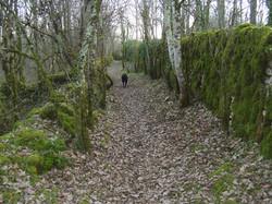 1_8_chemin,_jardin,_décombre,vieux_mur,